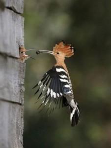 alimentar passarinho