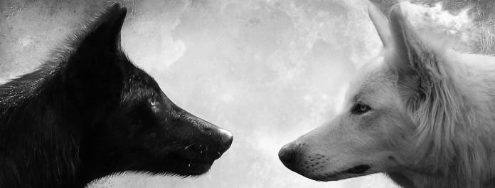 Resultado de imagem para Os dois Lobos - A QUEM VOCÊ ALIMENTA??