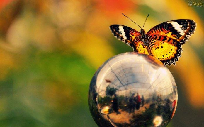 borboleta-globo-wallpaper-696x435.jpg