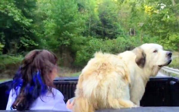 Cão gigante é abandonado na estrada e adotado por família que passava no local